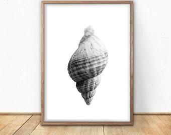 Sea Shell Print - Black And White, Digital Print, Instant Download, Coastal Art, Modern Minimalist Print, Nautical Art, Printable Poster