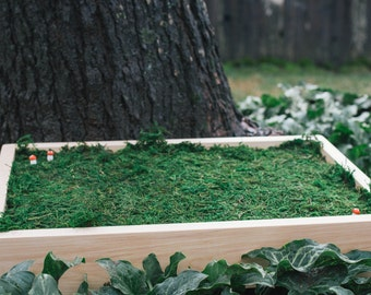 The Portable Fairy Garden ~ Birch