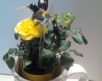 Flower friend Maroon /clear humming bird