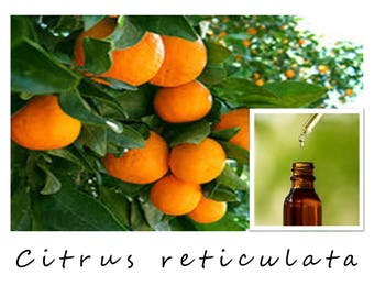 TANGERINE ESSENTIAL OIL, Citrus reticulata, Tangerine Oil, 100% Pure Therapeutic Essential Oil