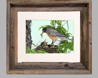 Robin and Babies- Framed- Barnwood
