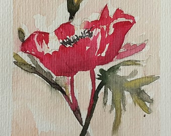 Oriental poppy Red watercolor
