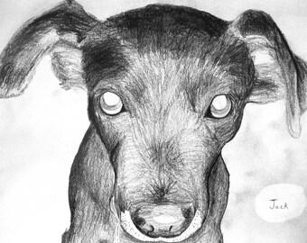 "Pet Portrait Custom Hand Drawn Pencil Sketch 12""x18"" Single Subject"