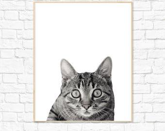 Animal Print, Animal Photography, Cat Print, Nursery Decor, Nursery Print, Wall Art, Instant Download, Baby Room, Kids Room, Baby Shower