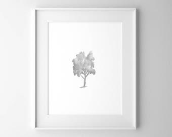 Beech Tree, Botanical Art, Tree Art, Watercolor Print, Black and White