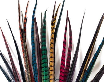 Dyed Pheasant Feathers, Ringneck pheasant Feathers, 12 pack