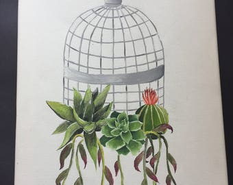 Caged Succulents