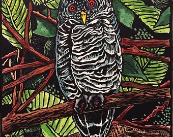 Black Banded Owl Linocut, Hand Colored