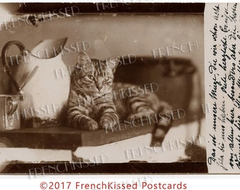 Striped Tabby Cat Next to Enamelware Pitcher Antique Real Photo Sepia Postcard Digital Printable