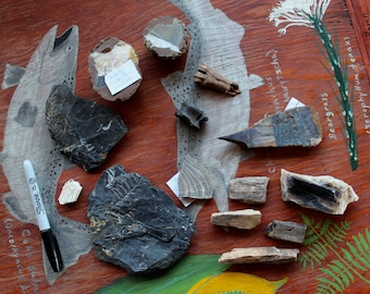 Lot of petrified wood, fossils and other mineral specimens for crafts, jewelry and more