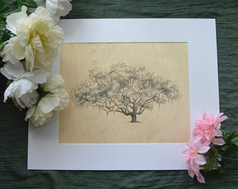 Ribault Club Oak Tree Art Print on Wood Veneer - Pen and Ink Drawing - 11x14