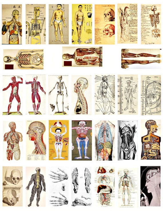 1x2 inch human anatomy domino collage sheet medical science clip art digital download images printable graphics craft papers