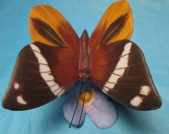 Butterflies of the World Butterfly Franklin Mint Series Tufted Jungle King Porcelain