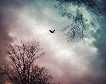 dramatic sky photo, fine art decor bird flying photograph, nature pink blue landscape, surreal dreamy home spirit animal spiritual psychic