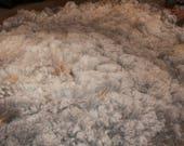 Cleo -  CVM Romeldale raw fleece - medium gray, hand spinners, knitters, felt or dye