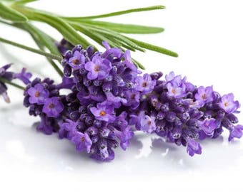 Lavender scented products Shower Gel, Whipped Body Butter, Lotion, Body Spray, Bath Soak, Shampoo or Conditioner
