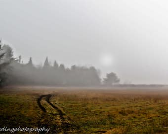 Field in Fog, Maine, Farms, Fields, Rustic, Color Photography, Country LIfe, Landscapes,  8x10 and larger