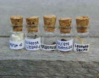 No. 001 Miniature Curiosity Cabinet Set.