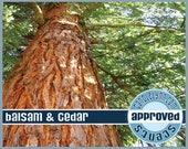 BALSAM & CEDAR Fragrance Oil, 2 oz