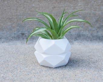 Elsa - Air Plant/ Mini Succulent Planter