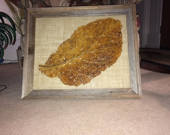 Framed tobacco leaf