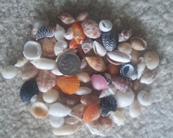 Bulk MINI SEASHELL STONE Mix Zen-Fairy Garden Jewelry Craft  Sailors Valentine Teeny Sea Shell Beach Coastal