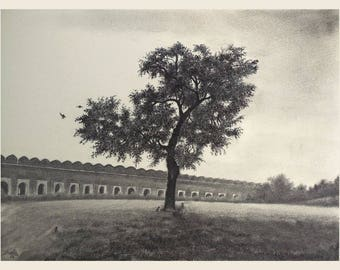 Indian Lilac Tree Pencil Drawing