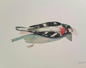 Window Strike Series: Rose Breasted Grosbeak II, original watercolor, bird painting, ornithology, red and black and white, ooak painting