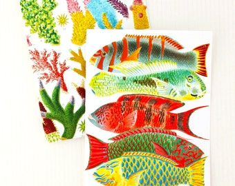 Nautical Wall Art/Greeting Cards - Set of 3 Colorful Illustrations of Fish, Coral and Starfish, Tropical Blank 5x7 Cards - Barrier Reef