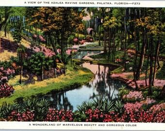 Palatka, Florida, Azalea Ravine Gardens - Linen Postcard - Postcard - Unused (O)