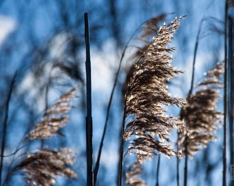 Blue wall art, Grass photography, Nature photography, Macro photography, Botanical art, Grass and wind, Modern art, Woodland cottage