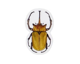 Elephant Beetle Magnet / Insect Collection / Nature Art / Refrigerator Magnet / Office Magnet / Party Favor / Small Gift
