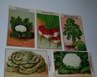 B 5 1920's vegetable seed packet labels French lithograph ephemera art scrapbook supplies Vintage advertising label scrap lot