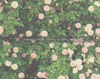 Pink Flowers, Summer Flowers, Flower Art, Flower Art Print, Flower Decor, Flower Background, Floral Art, Floral Print, Floral Photography