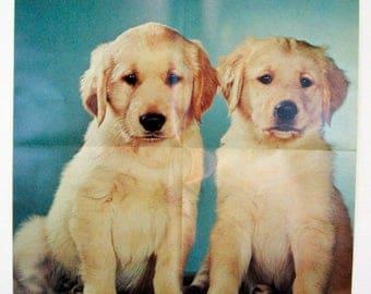 Vintage 1970's Walter Chandoha Golden Retrievers Puppies Poster