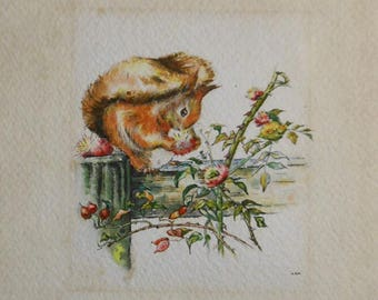 vintage watercolor of red squirrel eating rose hips signed