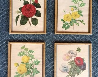 1950's 4 framed botanical prints 8x10 Anemone Camellia Rose