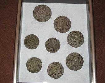 Sea Urchin Wall Art