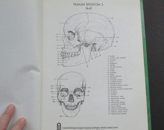 Vintage Anatomy and Physiology Notebook Paper Ephemera Collage Pages Science