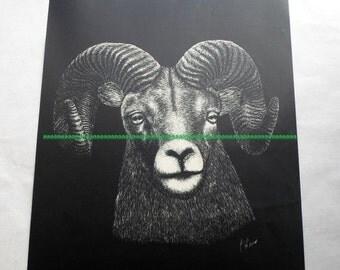 ON SALE Vintage Jack Kline Black and White Bighorn Sheep Print 11x14 Wildlife