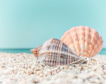 Seashell Photography - beach ocean photo turquoise tan orange shell sea shell print coastal seashore wall art bathroom decor beach details