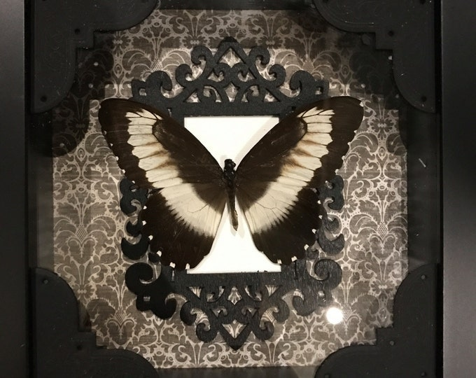 Black and white taxidermy butterfly display! Beautiful!