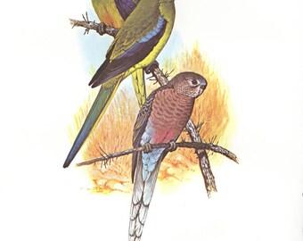 Vintage Original Parrots prints dates 1970's tropical birds,decorative art, wall art, hotel art, home decor, Sale item
