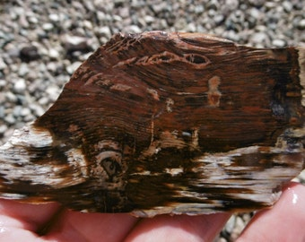 Petrified Wood Slab (80X45X4)