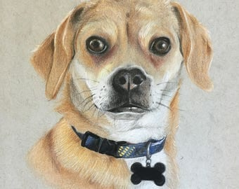 5x7 Custom Pet Portrait / Custom Dog Portrait / Colored Pencil Pet Portrait / Custom Pet Portrait Illustration