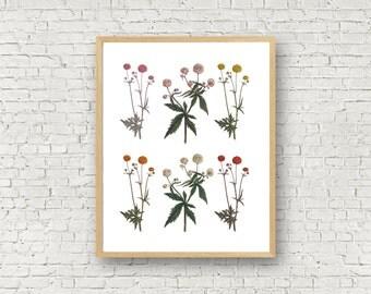 Marigold Print - Printable - 8x10 - Instant Download - Botanical Artwork