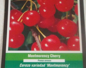 4ft live Montmorency Cherry Tree Sweet Cherries Trees Juicy Tart Fruit Orchard Plant Landscape Yard Design Garden Gardens Landscaping Now