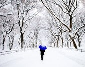 NYC - Central Park Winter - Blue Umbrella, Winter in New York City - The Mall in Central Park