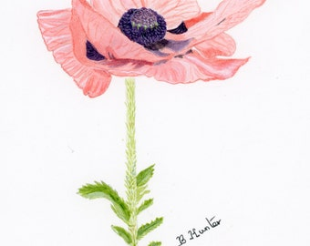 Botanical giclee print from a water colour painting of a pink poppy
