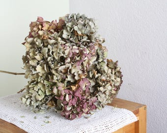 10 dried Hydrangea-Flowers ,with shades cream and purple mixed